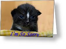 I'm So Sorry Greeting Card Greeting Card