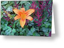 Image Included In Queen The Novel - Late Summer Blooming In Vermont 23of74 Enhanced Greeting Card