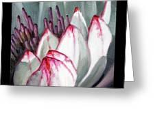 Image Number Twelve Greeting Card