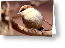 Img_0001 Brown-headed Nuthatch Greeting Card