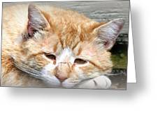 Img_0001 Cat Greeting Card