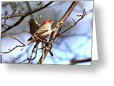 Img_0001 - House Finch Greeting Card