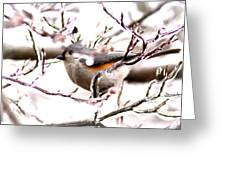 Img_0001 - Tufted Titmouse Greeting Card