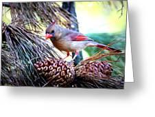 Img_0311 - Northern Cardinal Greeting Card
