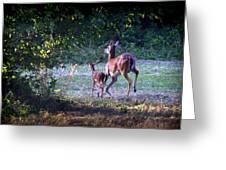 Img_0461-020 - White-tail Deer Greeting Card