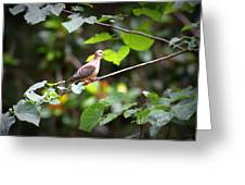 Img_0534-001 - Mourning Dove Greeting Card