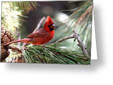 Img_0565-004 - Northern Cardinal Greeting Card