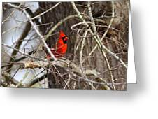 Img_0806 - Northern Cardinal Greeting Card