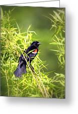 Img_0841-003 - Red-winged Blackbird Greeting Card