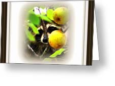 Img_0899-005-ttp Greeting Card