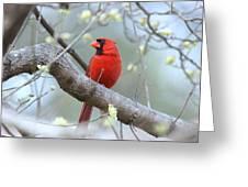 Img_0999-001 - Northern Cardinal Greeting Card