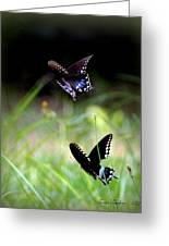 Img_1521 - Butterfly Greeting Card