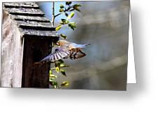 Img_1753-001 - Eastern Bluebird Greeting Card