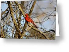 Img_2757-001 - Northern Cardinal Greeting Card
