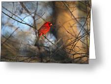 Img_2866-001 -  Northern Cardinal Greeting Card
