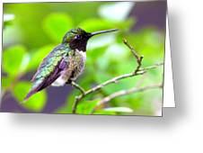 Img_3524-002 - Ruby-throated Hummingbird Greeting Card