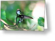 Img_4595-004 - Ruby-throated Hummingbird Greeting Card