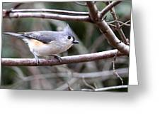 Img_4672 - Tufted Titmouse Greeting Card