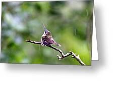 Img_5271-001 - Ruby-throated Hummingbird Greeting Card