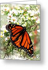 Img_5284-001 - Butterfly Greeting Card
