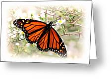 Img_5290-004 - Butterfly Greeting Card