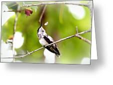 Img_7436-020 - Ruby-throated Hummingbird Greeting Card