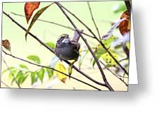 Img_7541-002 - White-throated Sparrow Greeting Card