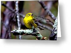 Img_8197-001 - Pine Warbler Greeting Card