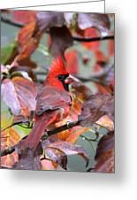 Img_ 8621 - Northern Cardinal Greeting Card