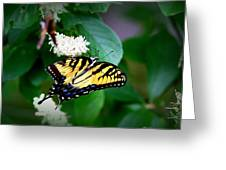 Img_8712-001 - Swallowtail Butterfly Greeting Card