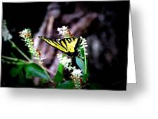Img_8960 - Tiger Swallowtail Butterfly Greeting Card
