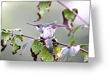 Img_9114-003 - Ruby-throated Hummingbird Greeting Card