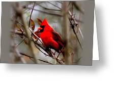 Img_9241 - Northern Cardinal Greeting Card