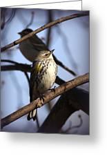 Img_9896 - Yellow-rumped Warbler Greeting Card