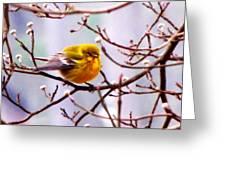 Img_9900 - Pine Warbler Greeting Card