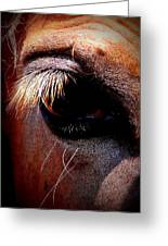 Img_9984 - Horse Greeting Card