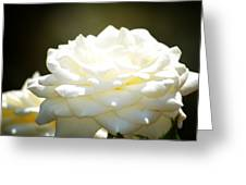 Immaculate Rose Greeting Card