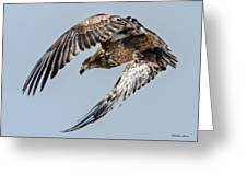 Immature Bald Eagle Leaving A Perch Greeting Card