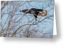 Immature Eagle Wheels Down Greeting Card