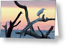 Immature Heron Glow Greeting Card