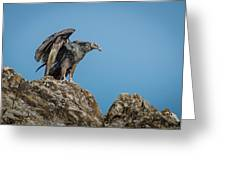 Immature Turkey Vulture 3 Greeting Card
