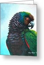 Imperial Parrot Greeting Card