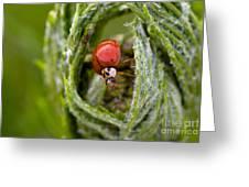 Imposter Ladybug Greeting Card