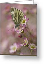Impression With A Small Butterfly Greeting Card
