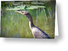 Impressionable Cormorant Greeting Card