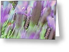 Impressionist Lavender Greeting Card