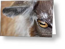 In A Goat's Eye Greeting Card