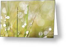 In A Meadow Greeting Card