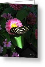 In A Ray Of Sunlight Greeting Card by Trina Prenzi