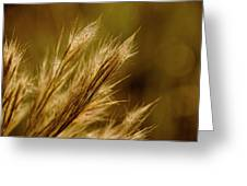 In An Autumn Field - Golden Macro Greeting Card